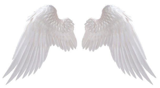 White-Wings-PNG-Image-1024x563.png