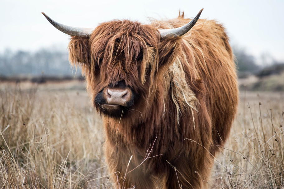 Happy Year of the Metal Ox