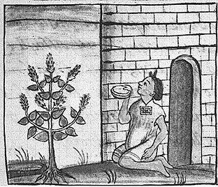 Все о семенах чиа: история семян Чиа