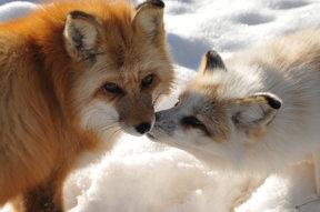 Lika & Yuma