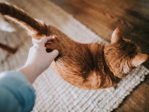 Kissa oksentaa - mikä vialla?