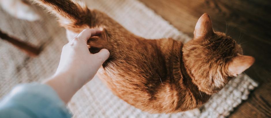 Les boules de poils de chats