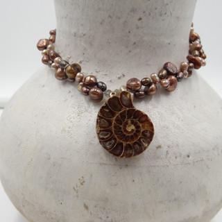 ammonite fossil.JPG