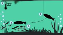 Reprodução do Black Bass & a Pescaria