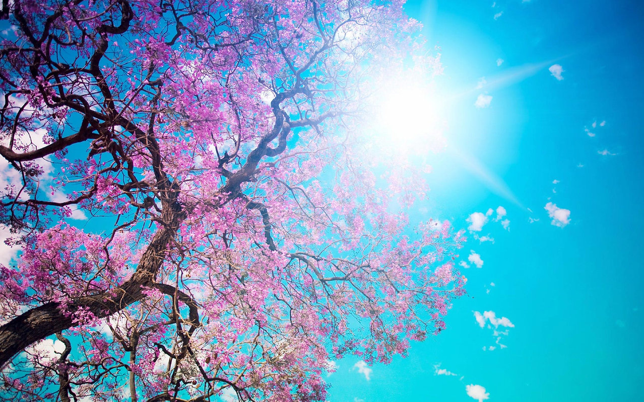 pink-tree-blue-sky-pretty-backgrounds-24