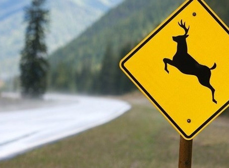 5 Safe Driving Tips for Deer Season