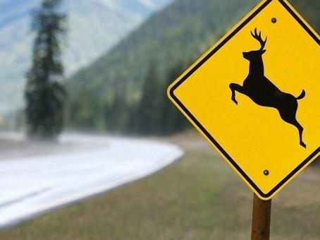 5 Safe Driving Tips for Deer Season