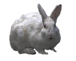 white_rabbit_png_by_virgolinedancer1-d77