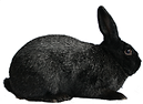 2011_rabbit.png