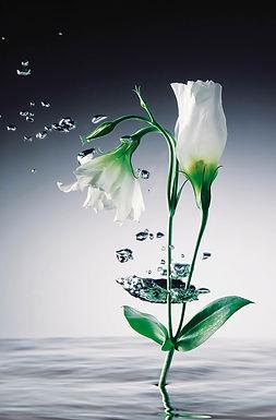 673 Crystal Flowers