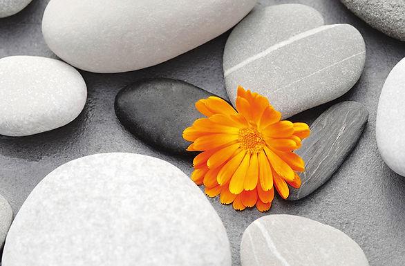 678 A Heart among Stones