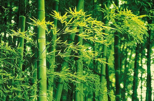 670 Bamboo in Spring