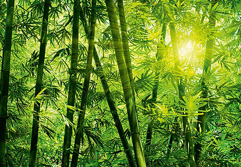 123 Bamboo Forest