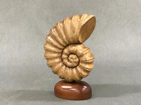 Ammonite by Clark Kirsch