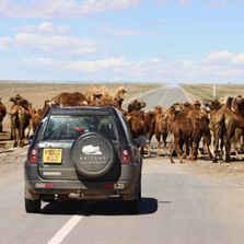 Two Fools, One Freelander: To Mongolia