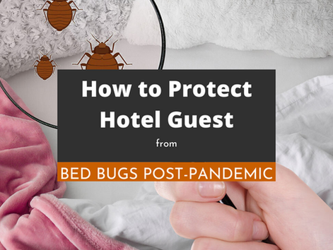 How to Protect Hotel Guests From Bed Bugs Post-Pandemic