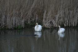Fauna an der Alten Oder