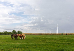 Horses Wind Turbines