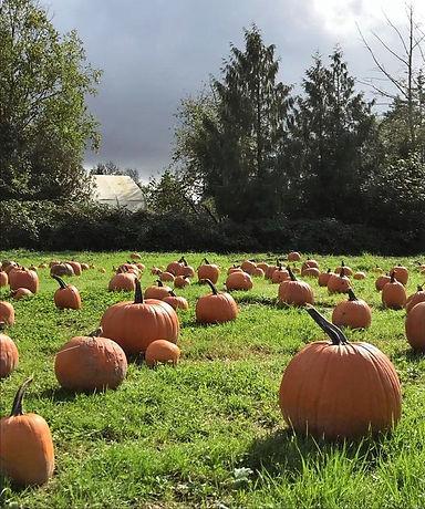 pumpkin3_edited.jpg