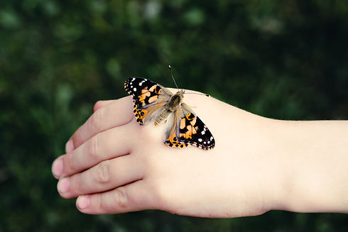 Child holding Painted Lady or Cosmopolitan Butterfly - Safe on Hand.jpg