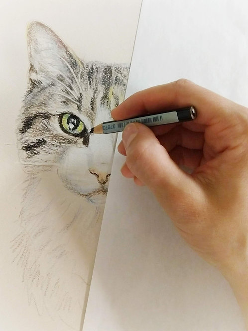 "5""x7"" pencil pet portrait, colored fully rendered"