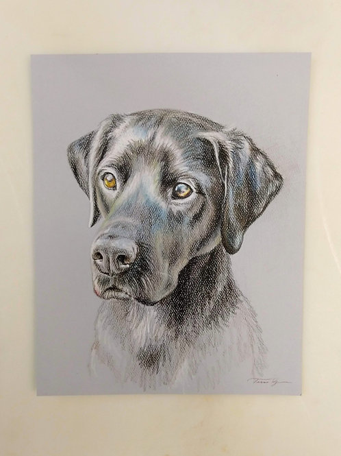 "9"" x 12"" colored pencil pet portrait, colored fully rendered"