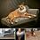 """Thumbnail: 16"""" x 20"""" DOUBLE Costume Pet Portrait"""