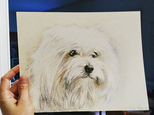 """8"""" x 10"""" colored pencil pet portrait, colored fully rendered"""