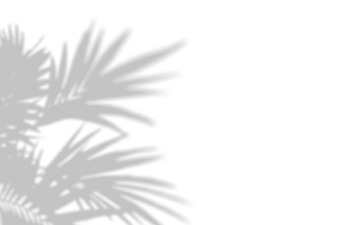 Palm%20shadow_edited.png