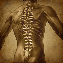 Human Spinal Column