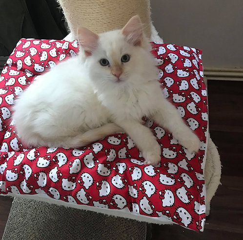 Pet Quilts - for dogs and cats