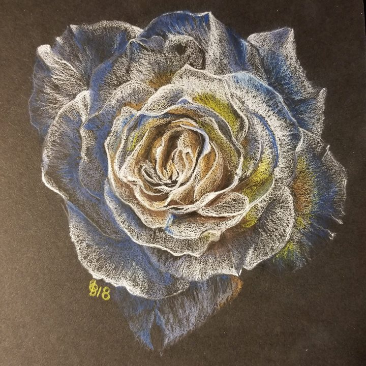 Rose, Polychromos colored pencils (and D
