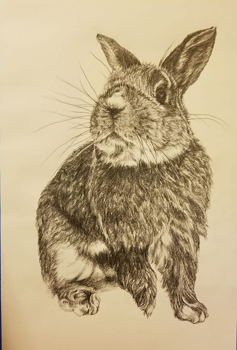 Bunny... 12x18 water soluble graphite.jp