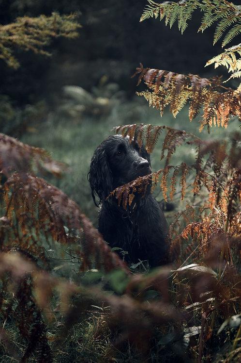 Pet Photography In The Lake District Cumbria, Black Cocker Spaniel, Fine Art Print