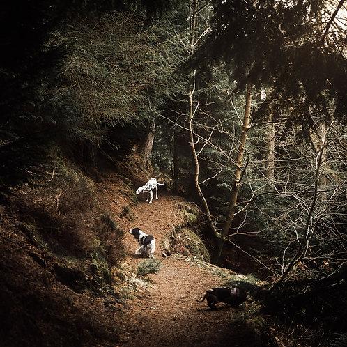 Pet Photography In The Lake District, Cumbria, Dalmatian, Springer Spaniel, Fine Art Print