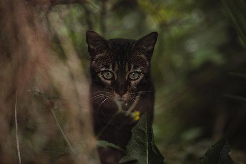 Pet Photography In The Lake District Cumbria, Bengal Cat, Fine Art Print