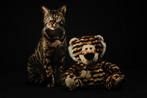 Bengal Cat & Friend