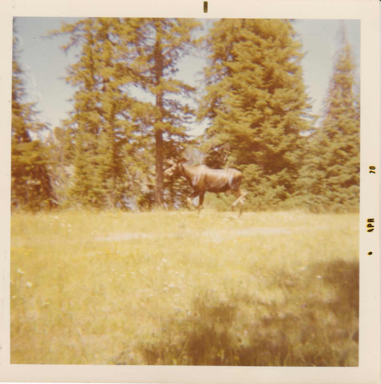 Yellowstone Park 69 4
