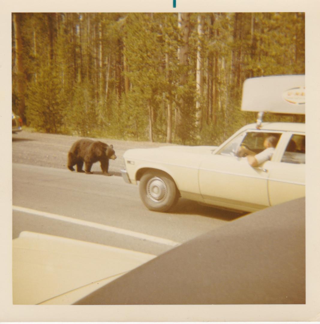 Yellowstone Park 69 5.jpeg