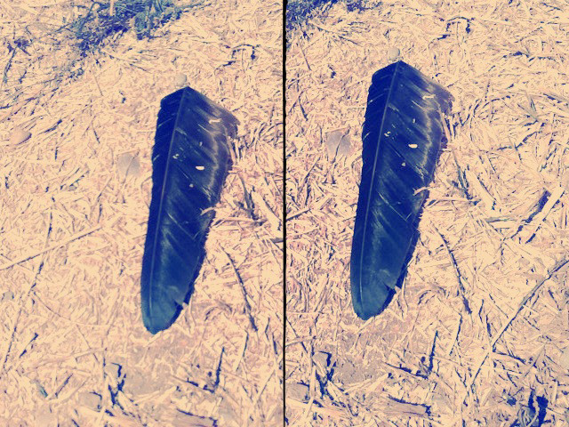 lost and found feather, Costa Rica