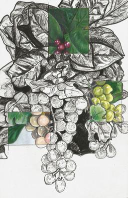 Grapes; Study
