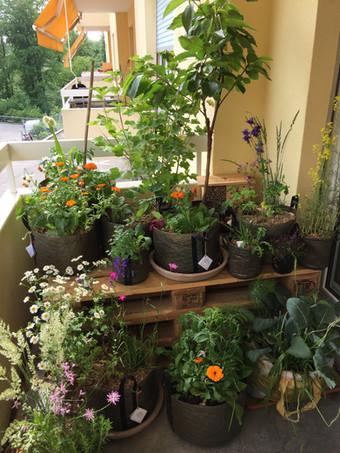 Un balcon biodiversifié