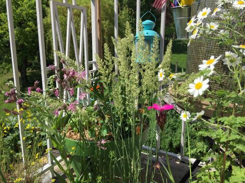 Graminées et fleurs de plein soleil