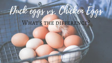 Duck Eggs vs. Chicken Eggs: What's the difference?