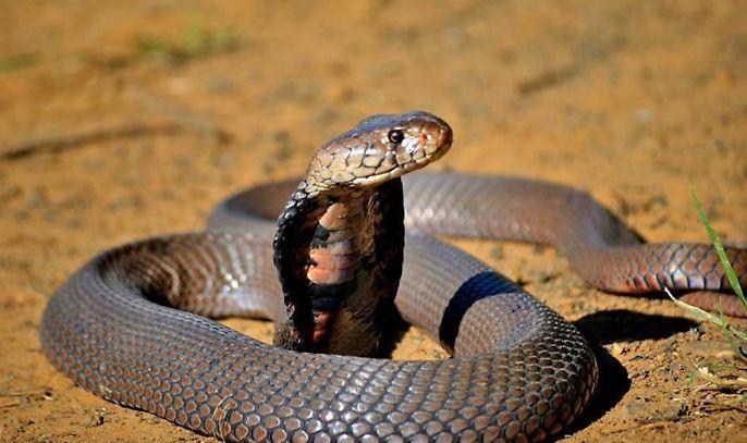 Ndlondlo reptile Park Ballito. Things to do while in Ballito