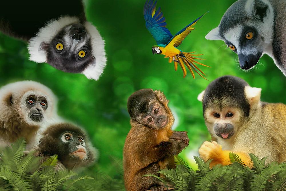 Monkey Land KZN - Things to do while in Ballito