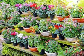 Potted-Plants-jpg.jpg