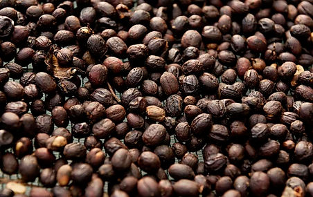Costa Rica Hacienda Sonora Coffee 16.jpg