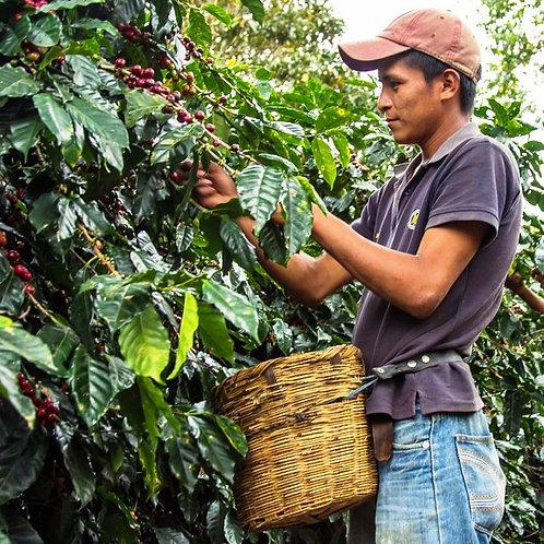 Honduras Santa Rosa RFA -per Kg