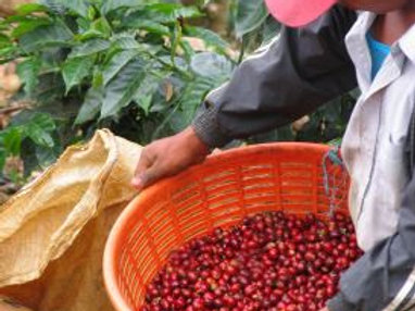Guatemala Finca Los Laureles - Per Kg